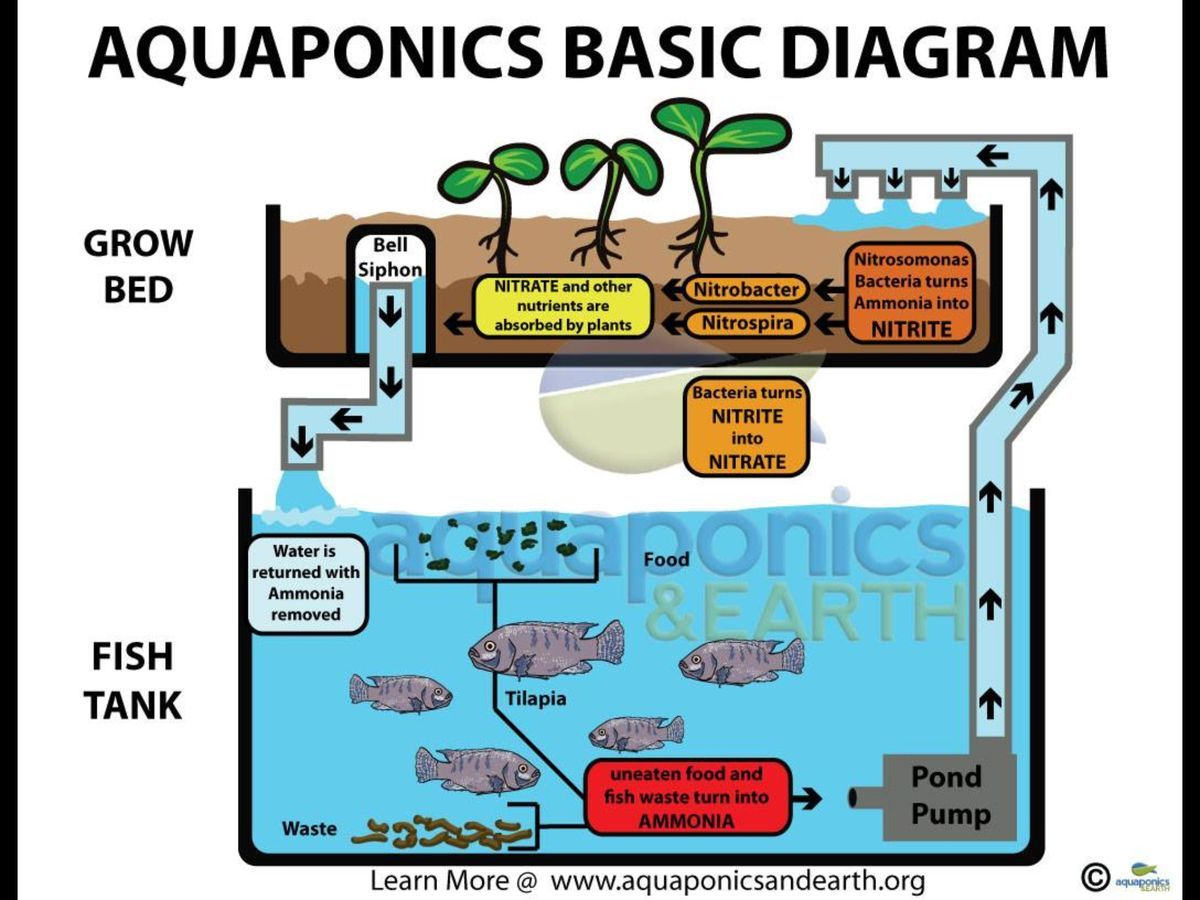 Basic aquaponics diagram | aquaponics | Pinterest | Diagram