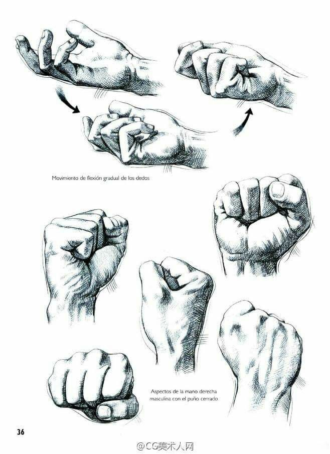 Pin de Victoria Vee en Draw: Hands | Pinterest | Anatomía, Dibujo y ...