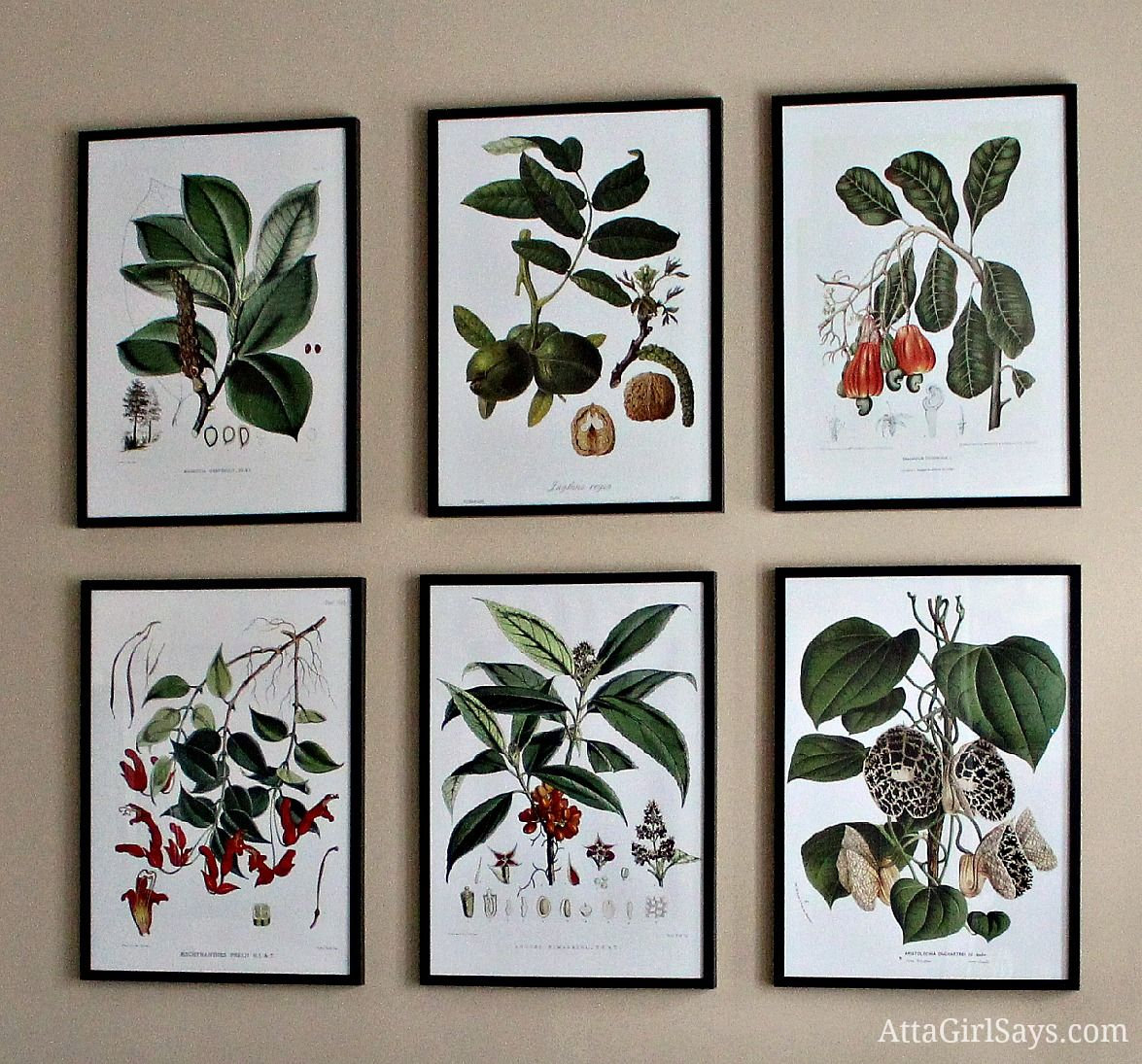 Where to Find Inexpensive Antique Botanical Prints | Pinterest ...