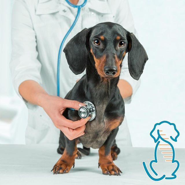 Genetic Health Screening -  Thinking about your dog's well-being? Consider checking your pet's genetic health! The new Cani - #Genetic #health #neardeath #neardeathnote #neardoubles #nearorfarquotes #nearxmello #Screening