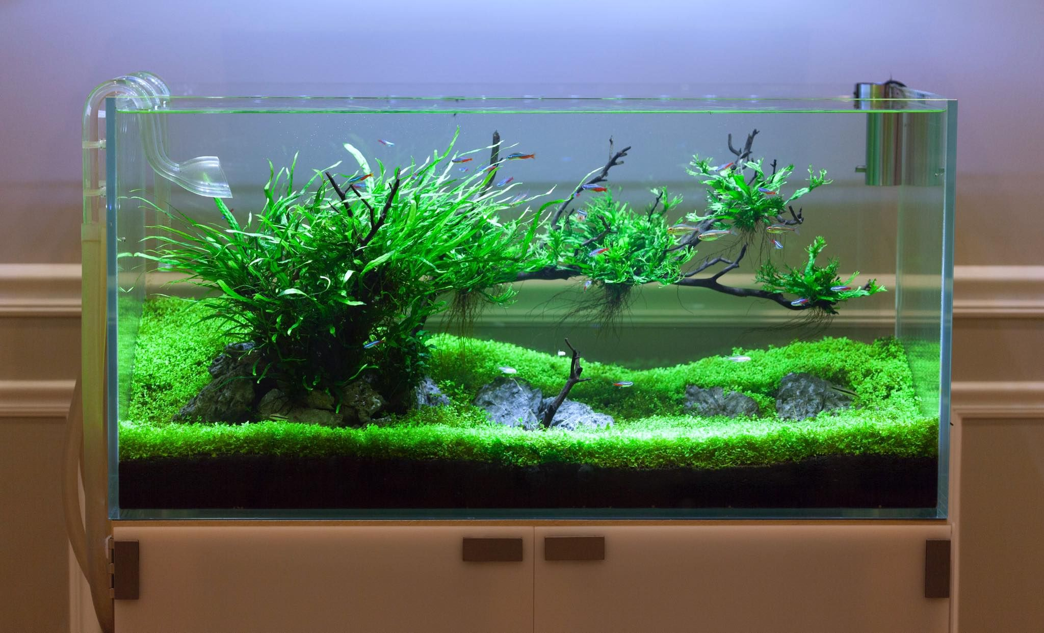 Pin by Daniel Proctor on Aquascaped Tanks Pinterest