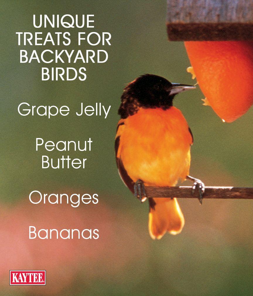 Unique Treats To Attract Beautiful Birds.