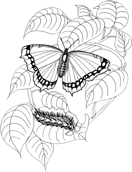 Butterfly Coloring Pages 25 | Free Patterns | Yarn | Coloring ...
