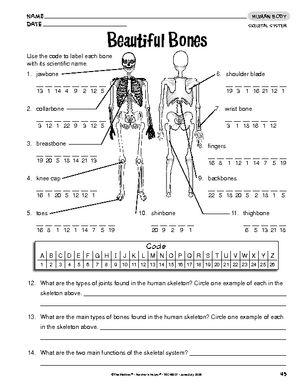 Bones Worksheet For Kindergarten