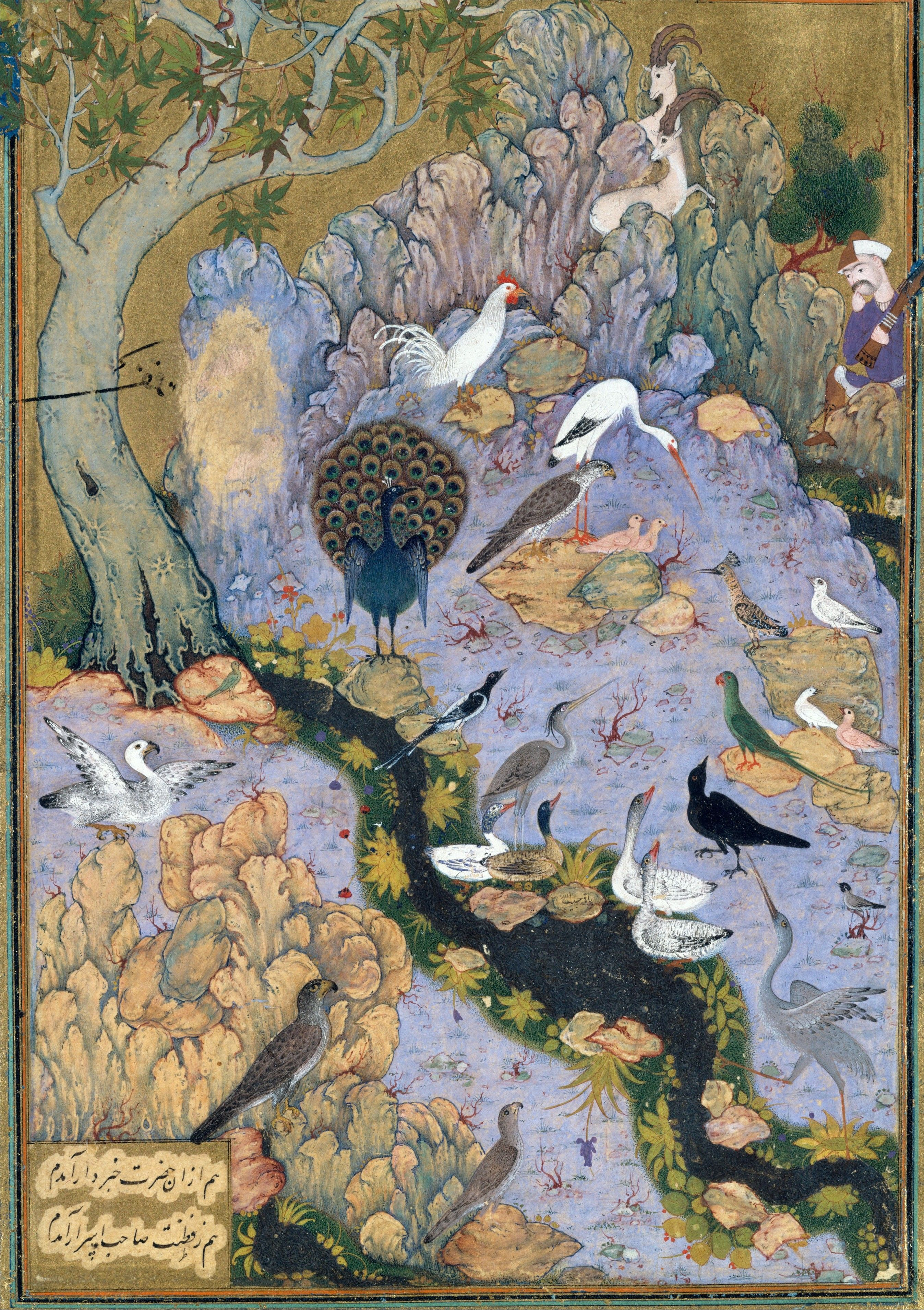 Conference of Birds Paintings