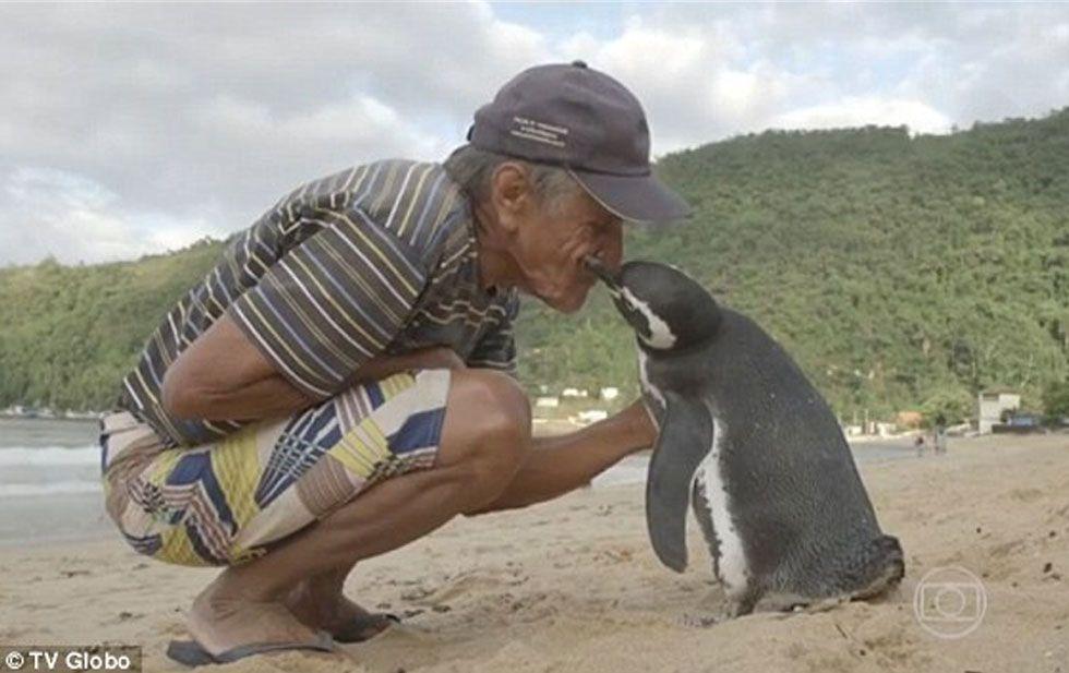El hombre lo encontró cubierto de petróleo, lo cuidó durante 11 meses y ahora el ave nada 8 mil kilómetros para verlo