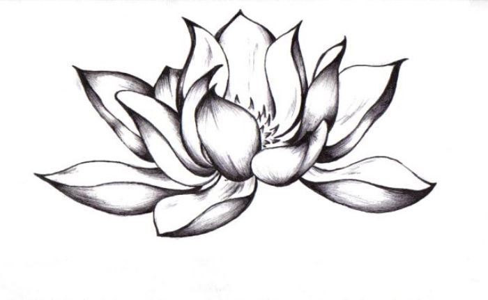 Pin By Aislinn Walker On Tattoos Or Taties Flower Tattoo Drawings Black Lotus Tattoo Lotus Flower Tattoo Design