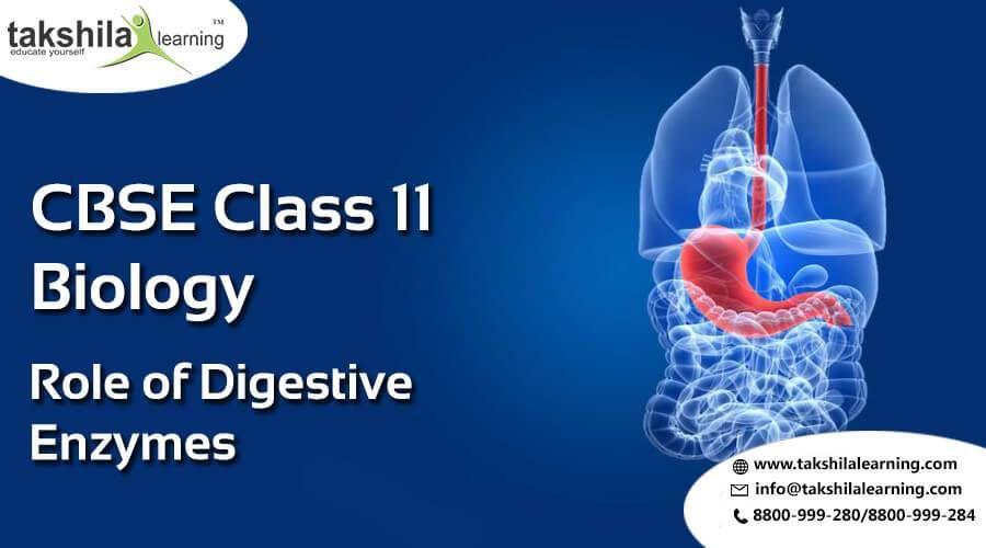 NCERT & CBSE Biology Class 11 Digestive Enzymes notes