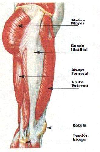 Músculos de la pierna. Visión lateral. Fascia lata. | Mi Fisio ...
