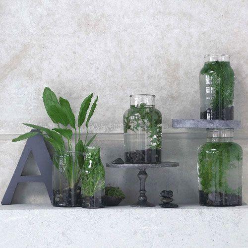 Zimmerpflanzen, überraschend Inszeniert Haus Mit Wintergarten Zimmerpflanzen Als Dekoration Szene Setzen