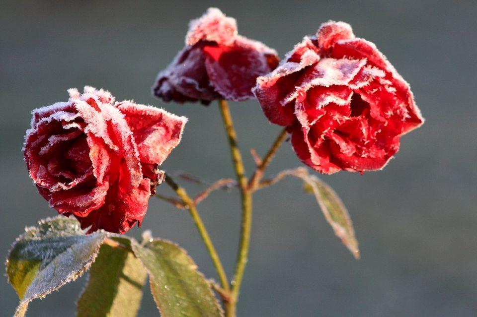 Winter 2013 in Finland
