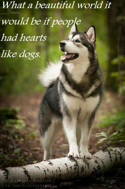 It Would Fill Our World With Kindness And Loyalty Dogs Husky