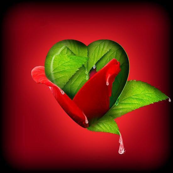 Pin By Suesbooks Info On Red Green Red Rose Love Heart Wallpaper Hd Heart Wallpaper