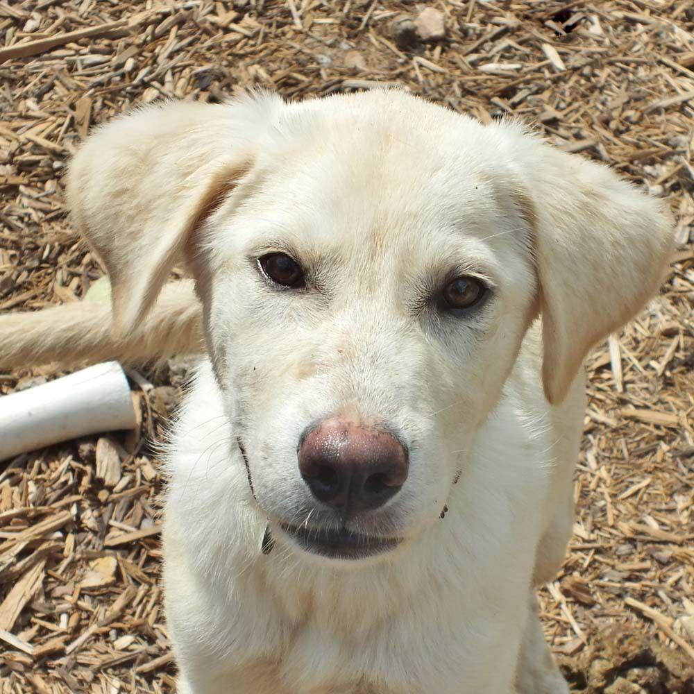 Adopt Bowie On Dog Adoption Animals Beautiful Animal Rescue