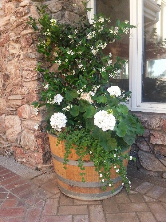 By cutting your wine barrel lengthwise, you have more room to plant ...