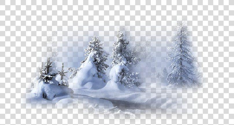 Landscape Winter Image Snow Winter Png Landscape Blizzard Cold Conifer Fir Winter Images Snow Winter Images Winter Landscape
