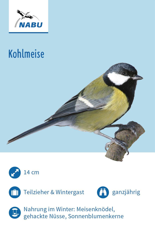 Die Kohlmeise Kohlmeise Meise Einheimische Vogel