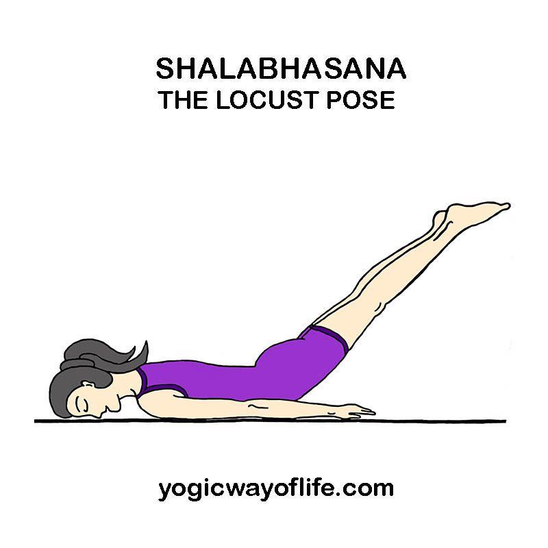 Shalabhasana Locust Pose Yoga Asana To Strengthen Lower Back Yoga Asanas Yoga Help Yoga For Flexibility