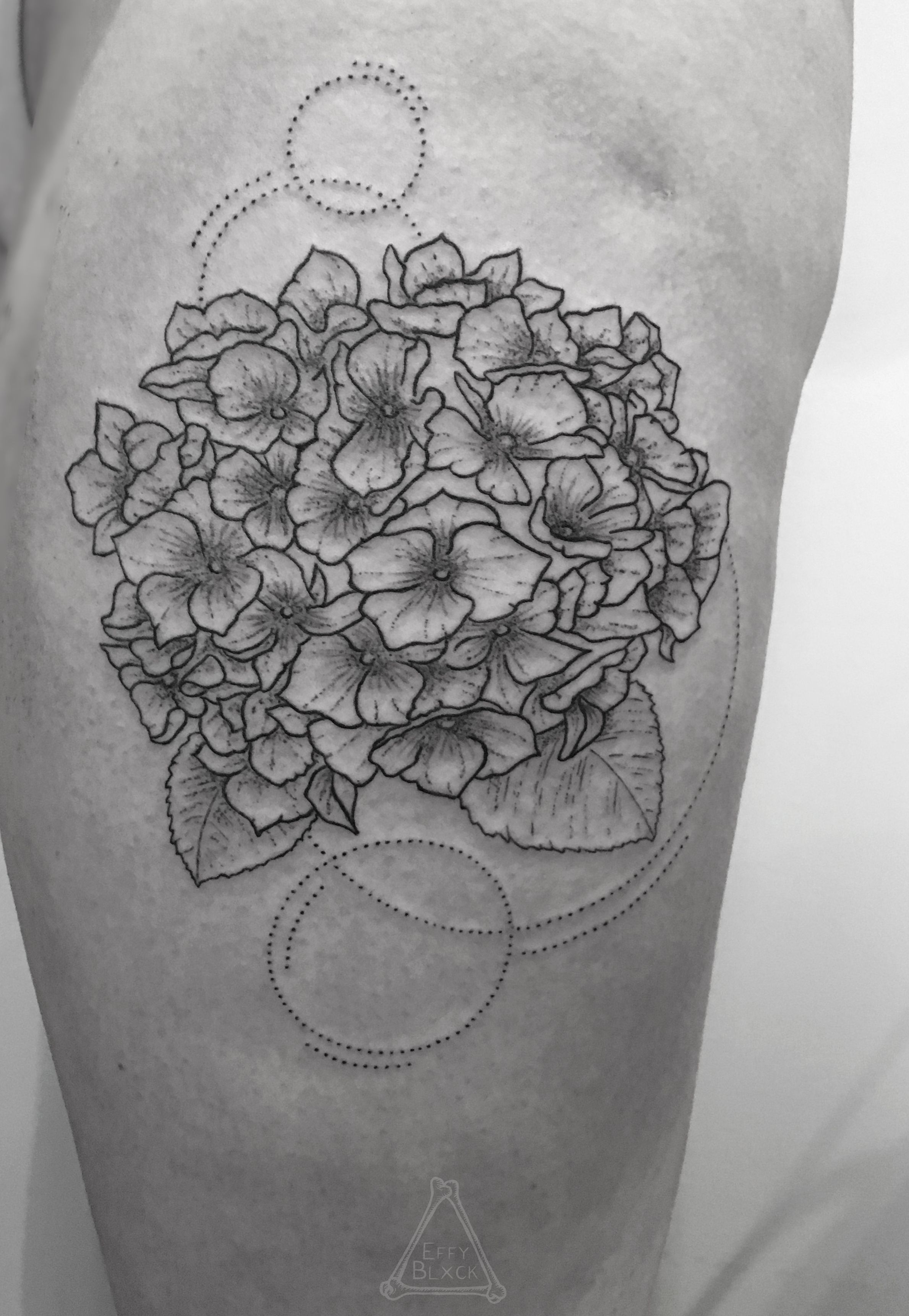 Hydrangea Tattoo Floral Tattoo Linework Dotworkers Darkartists Hydrangea Tattoo Tattoos Trendy Tattoos