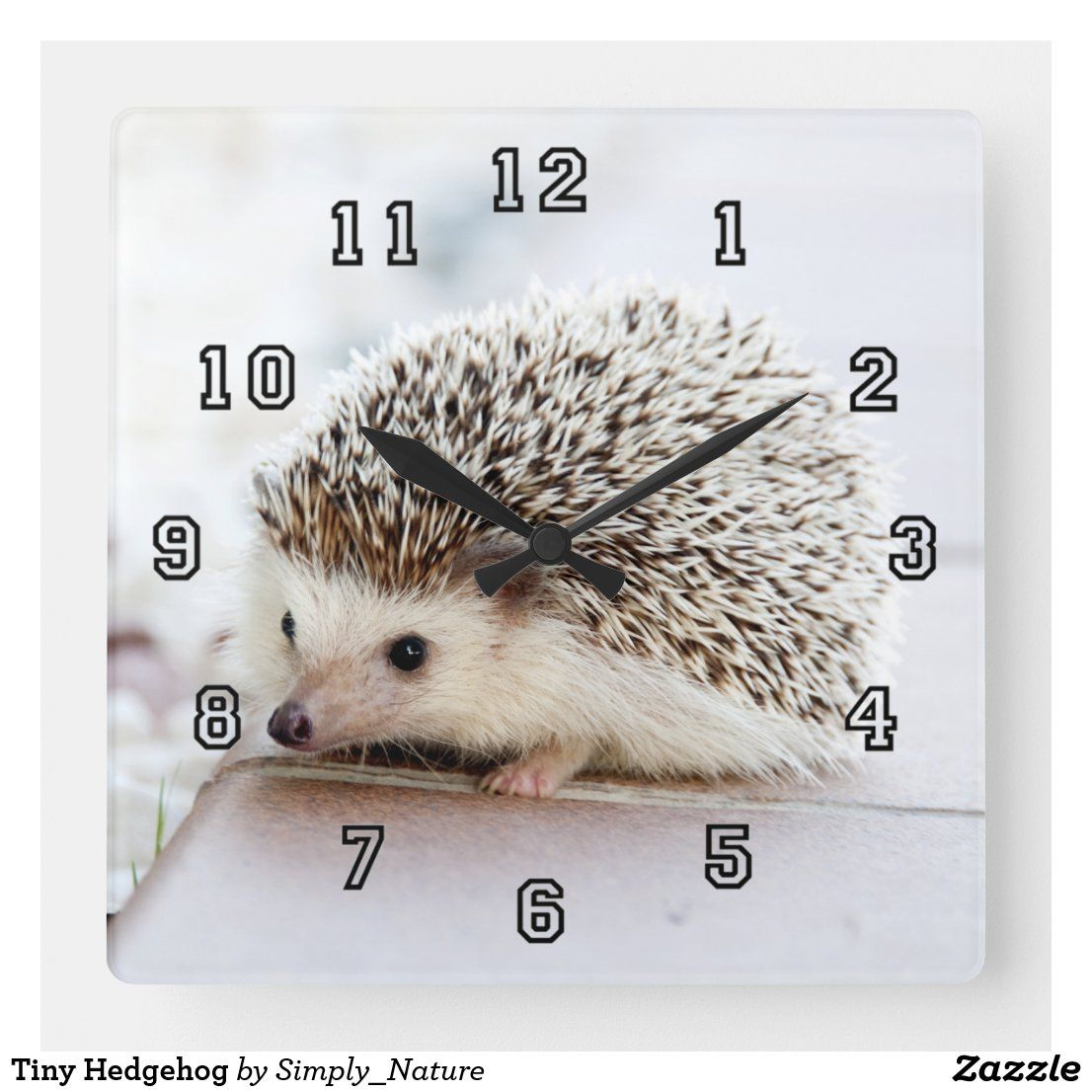 Tiny Hedgehog Square Wall Clock #Zazzle #Nature #Clock
