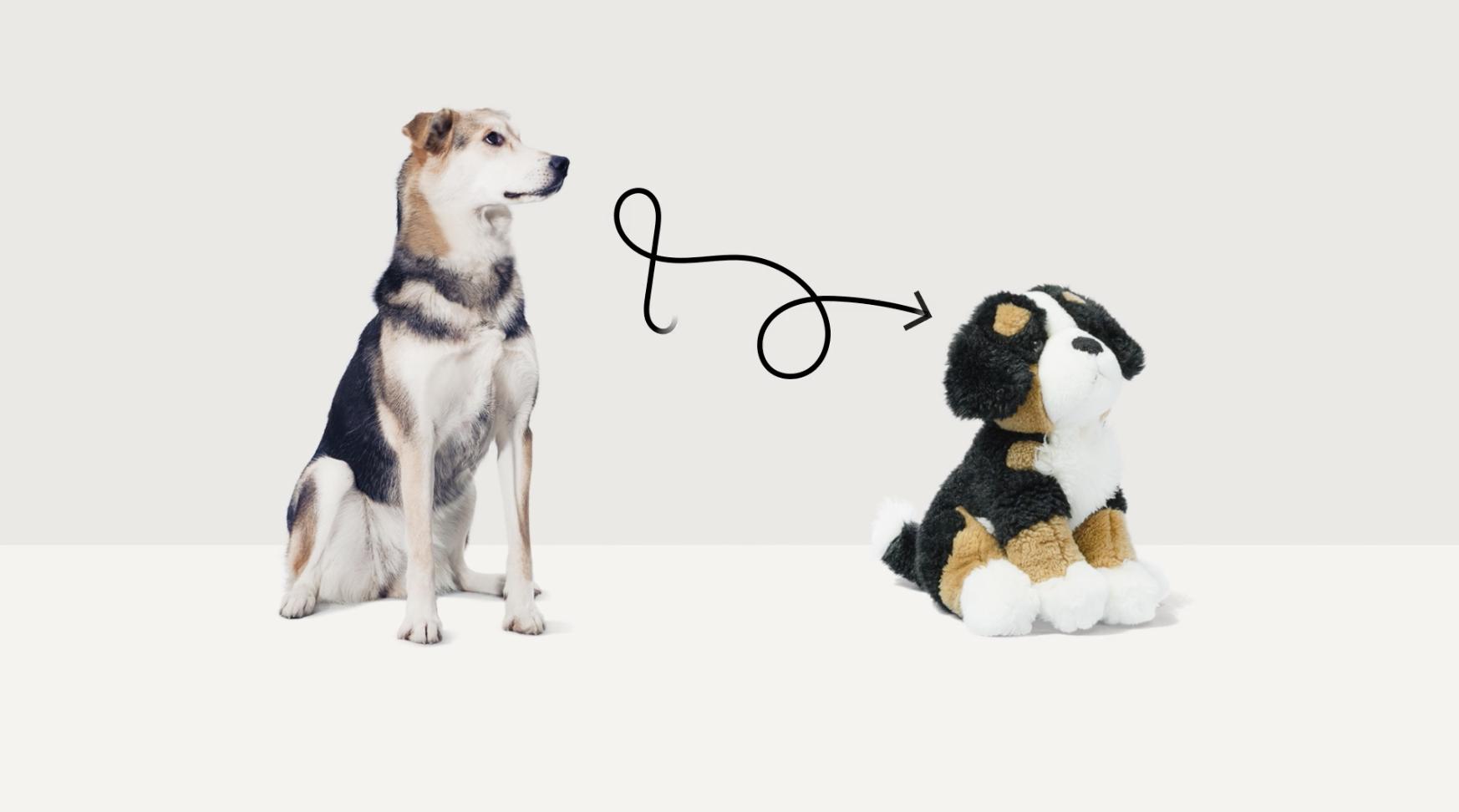 ペットを飼う前にぬいぐるみでトレーニング スロベニアの 正しい里親 啓蒙キャンペーン Adgang 里親 ペット 動物