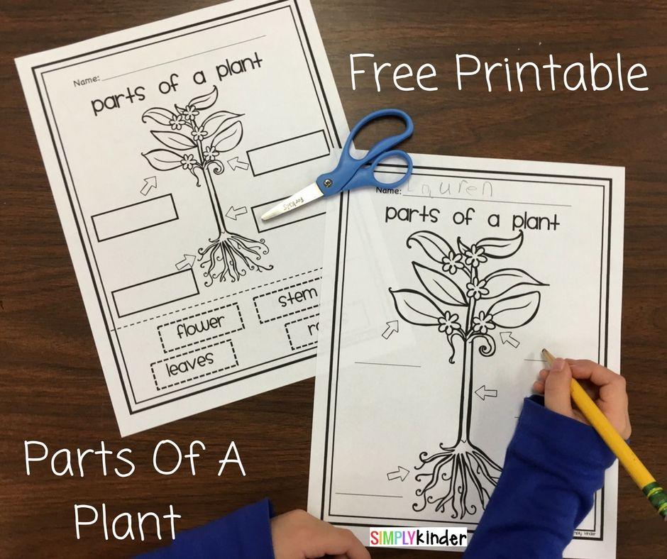 Free Parts Of A Plant Worksheet For Kindergarten