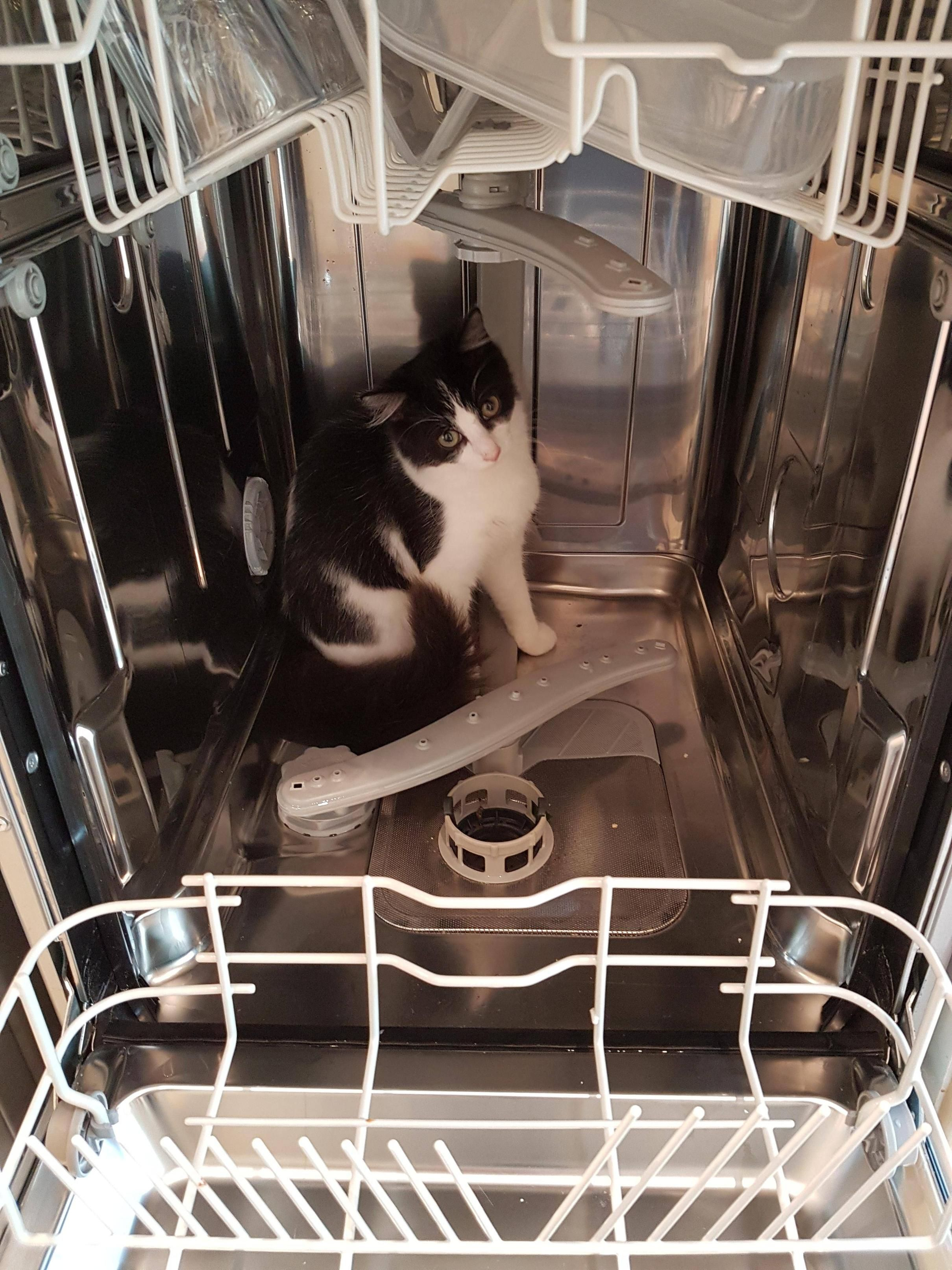 Does anybody know if cats are dishwasher-safe? Poppy seems to think she is