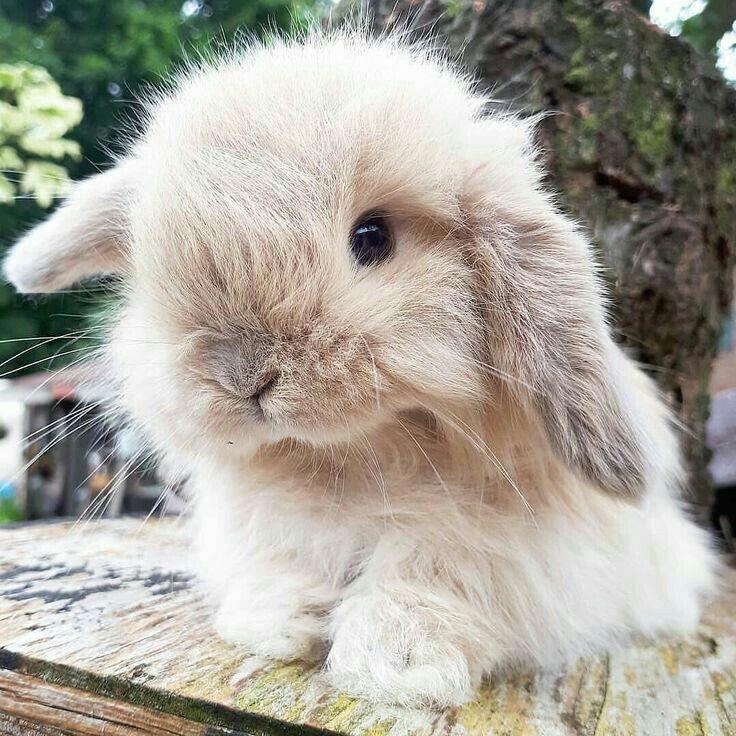 поскольку бьюти-блогер, милые кролики фото сравнению другими