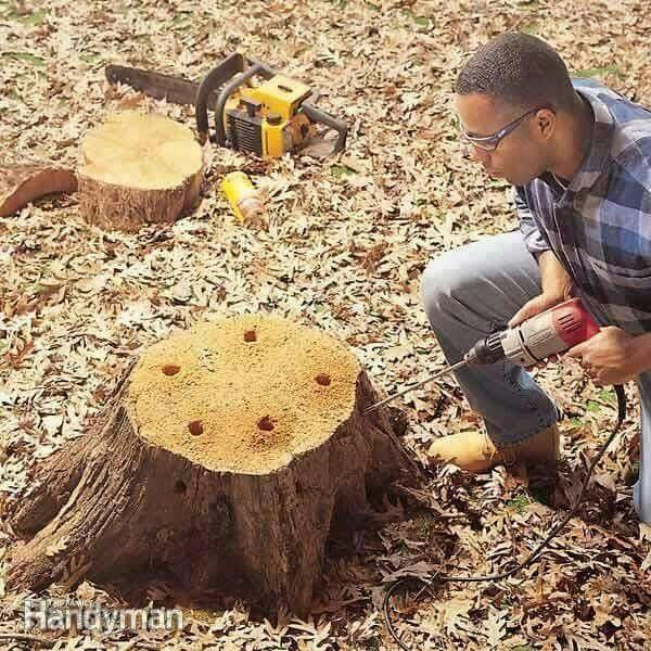 Macetas en un tronco de rbol proyectos de jard n - Troncos para jardin ...