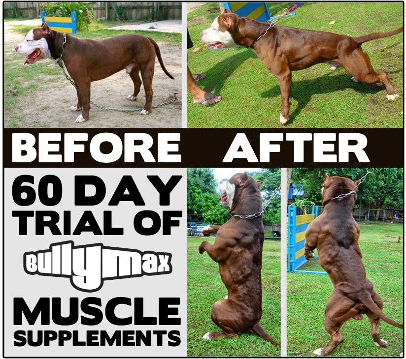Bully Max Before And After Pictures Bully Max Bullying Dog Supplements