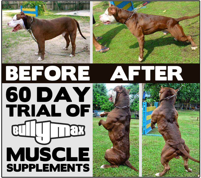 Maximum Bully Dog Food Vs Bully Max