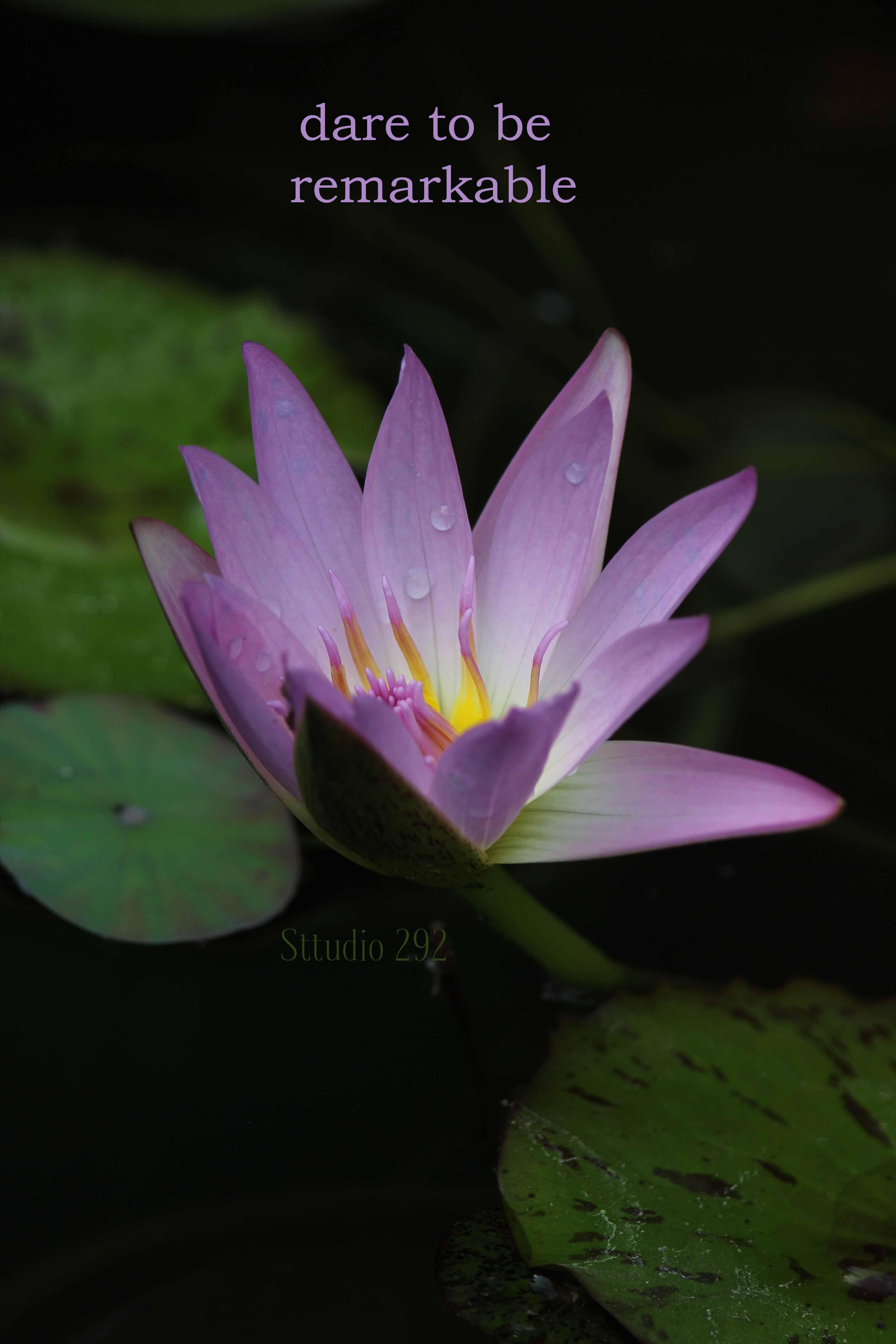 Lotus flowers inspirational quotes for 2018 beautiful flowers lotus flowers inspirational quotes for 2018 beautiful flowers beautiful flowers with quotes izmirmasajfo