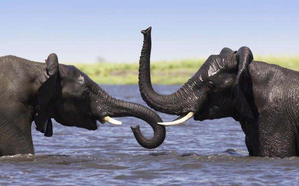 Tropical Rainforest Animals in Africa rainforest