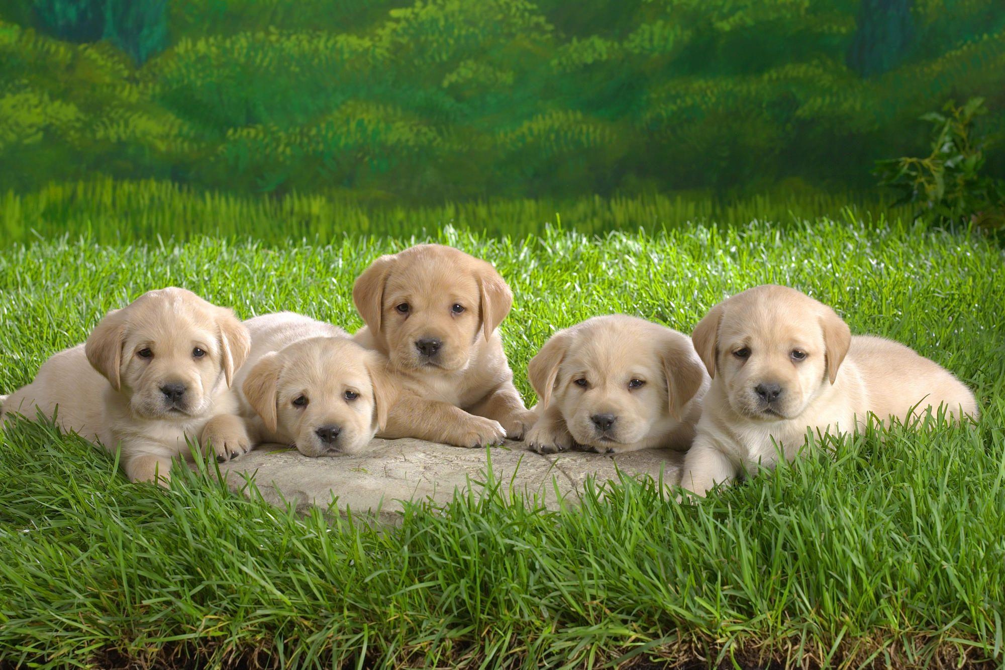 Cutedog Cutedogs Fordirtydogs Organicdogshampoo Dogshampoo
