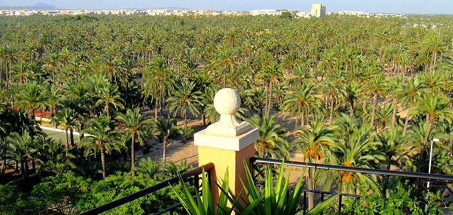 A pasear al Palmeral de Elche (Alicante)