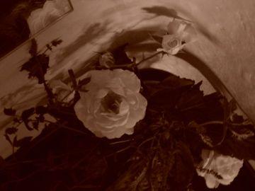 Rose / 2011
