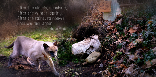 Merlin at cat grave