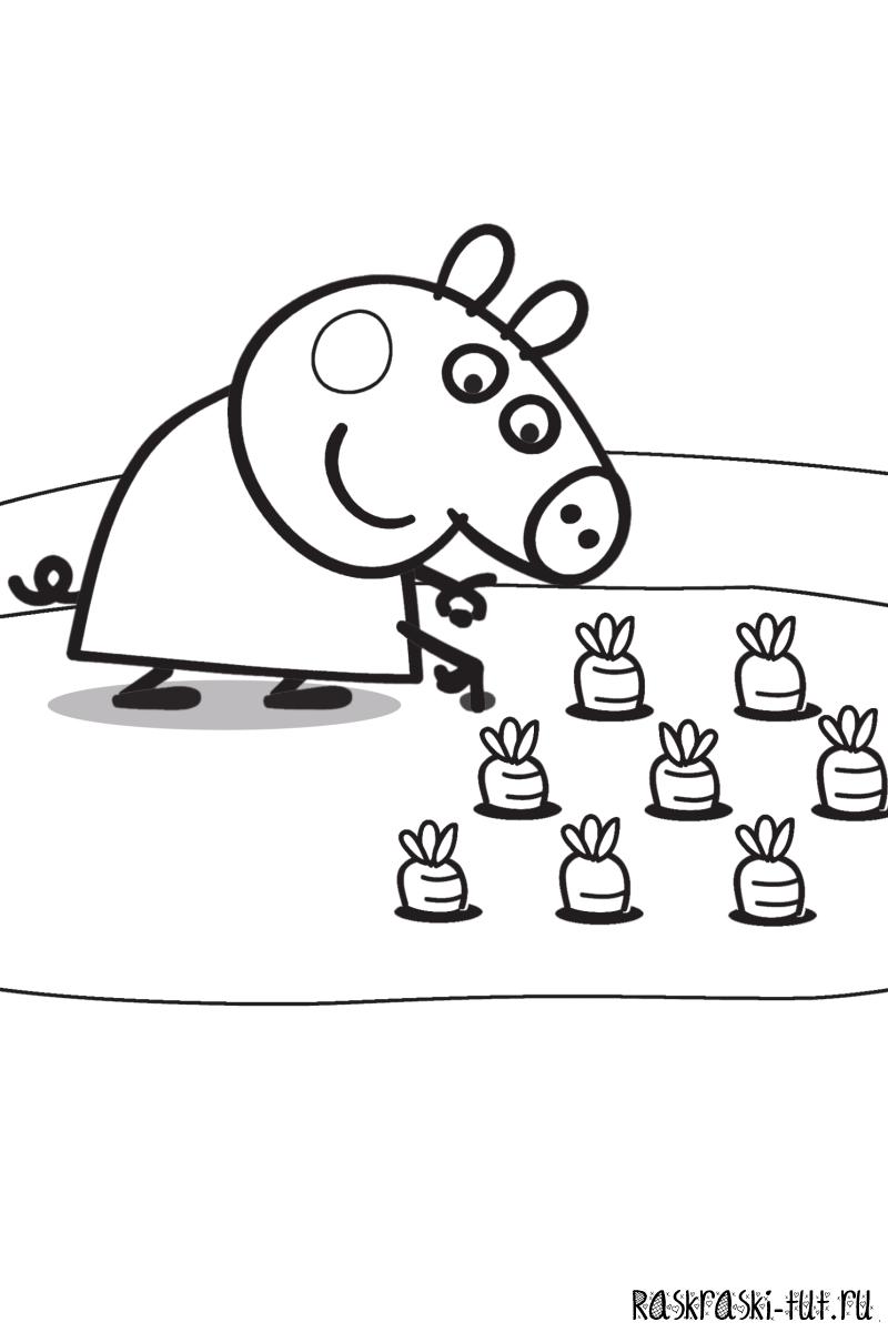 Раскраска Свинка Пеппа | Свинка пеппа, Свинки, Раскраски