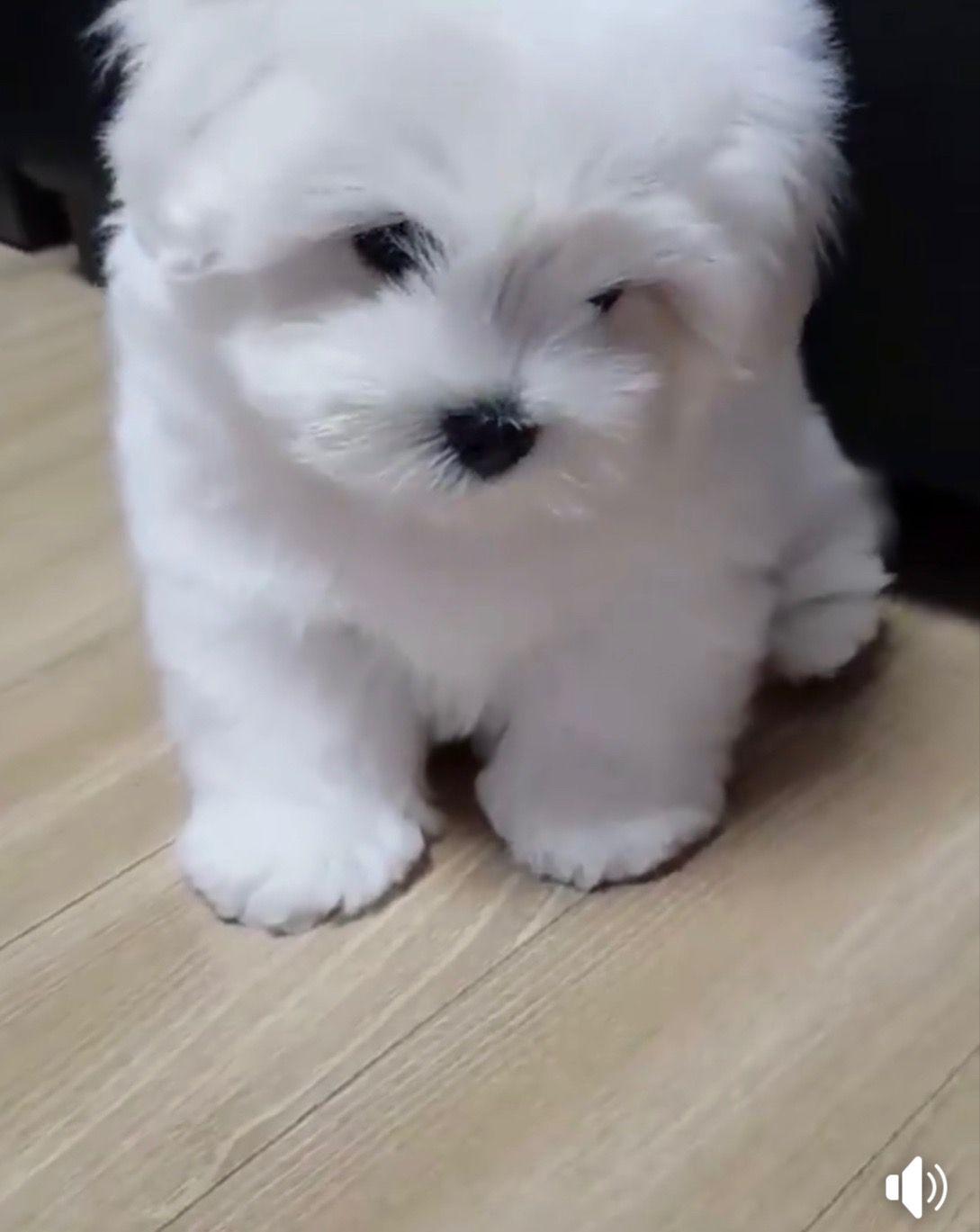 ˗ˏˋ theartofblushing ˎˊ˗ Cute animals, Cute dogs, Baby
