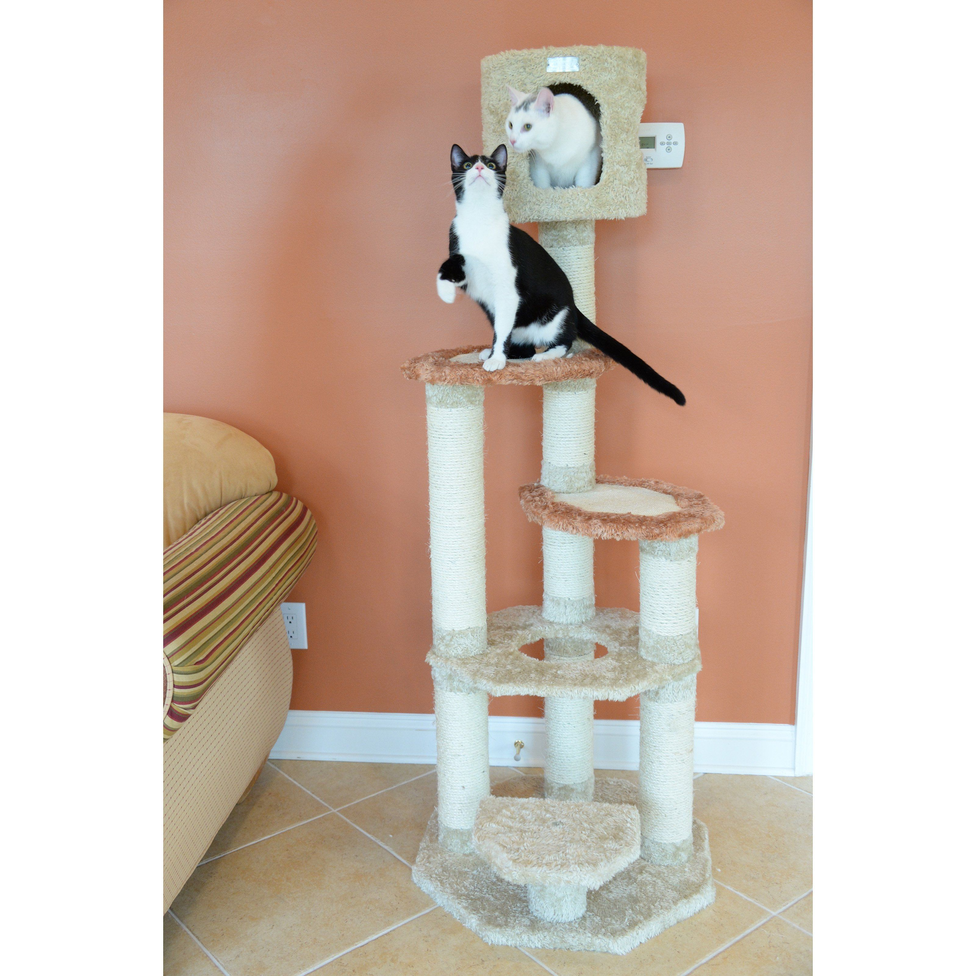 photo cats medium domestic picture frame sized animal illustration decorative life sit images furniture to decoration still cat european small en chair shorthair free