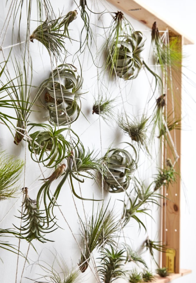 3 ways to display your airplants and succulents Air