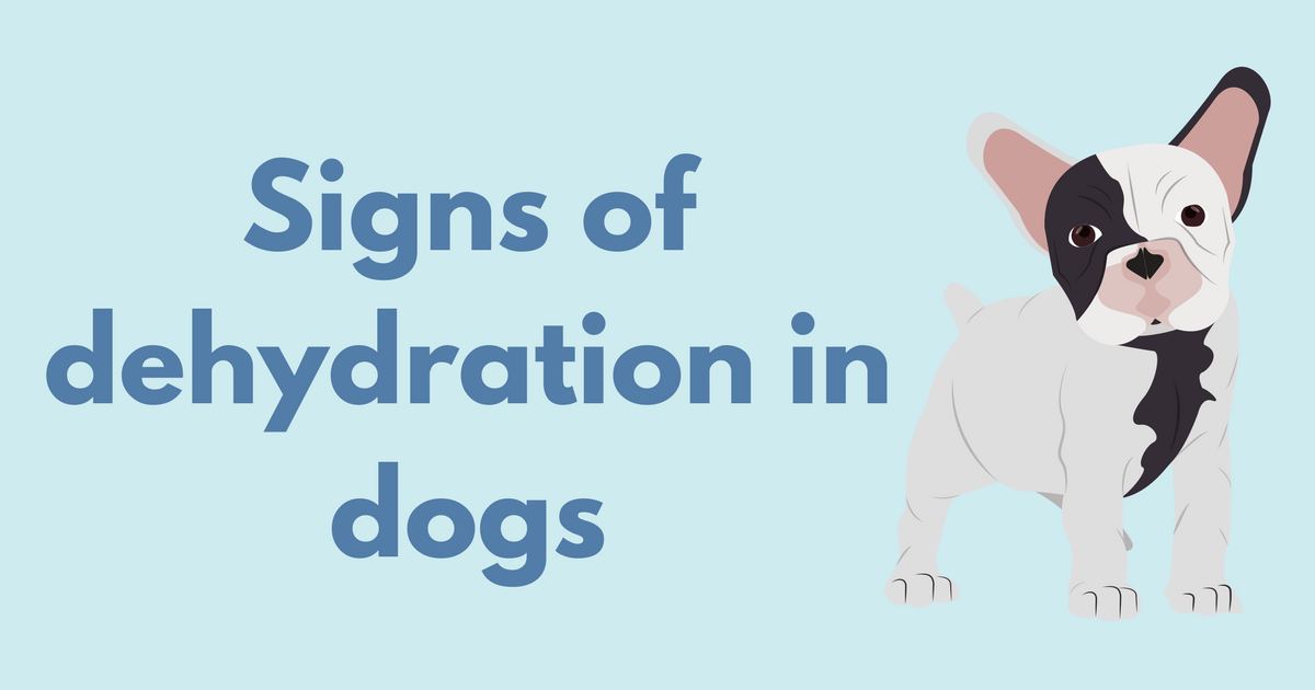 Signs Of Dehydration In Dogs I Love Veterinary Dogs Veterinary Hospital Outdoor Dog