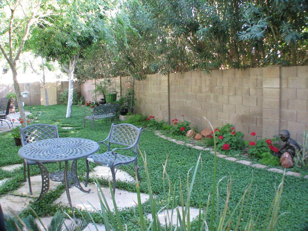 mini clover yard - drought tolerant