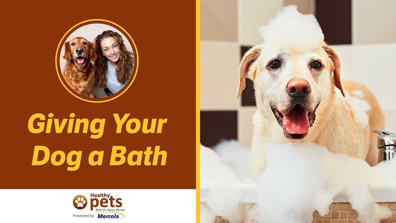 Dr Becker On Giving Your Dog A Bath Youtube Jack Charlie