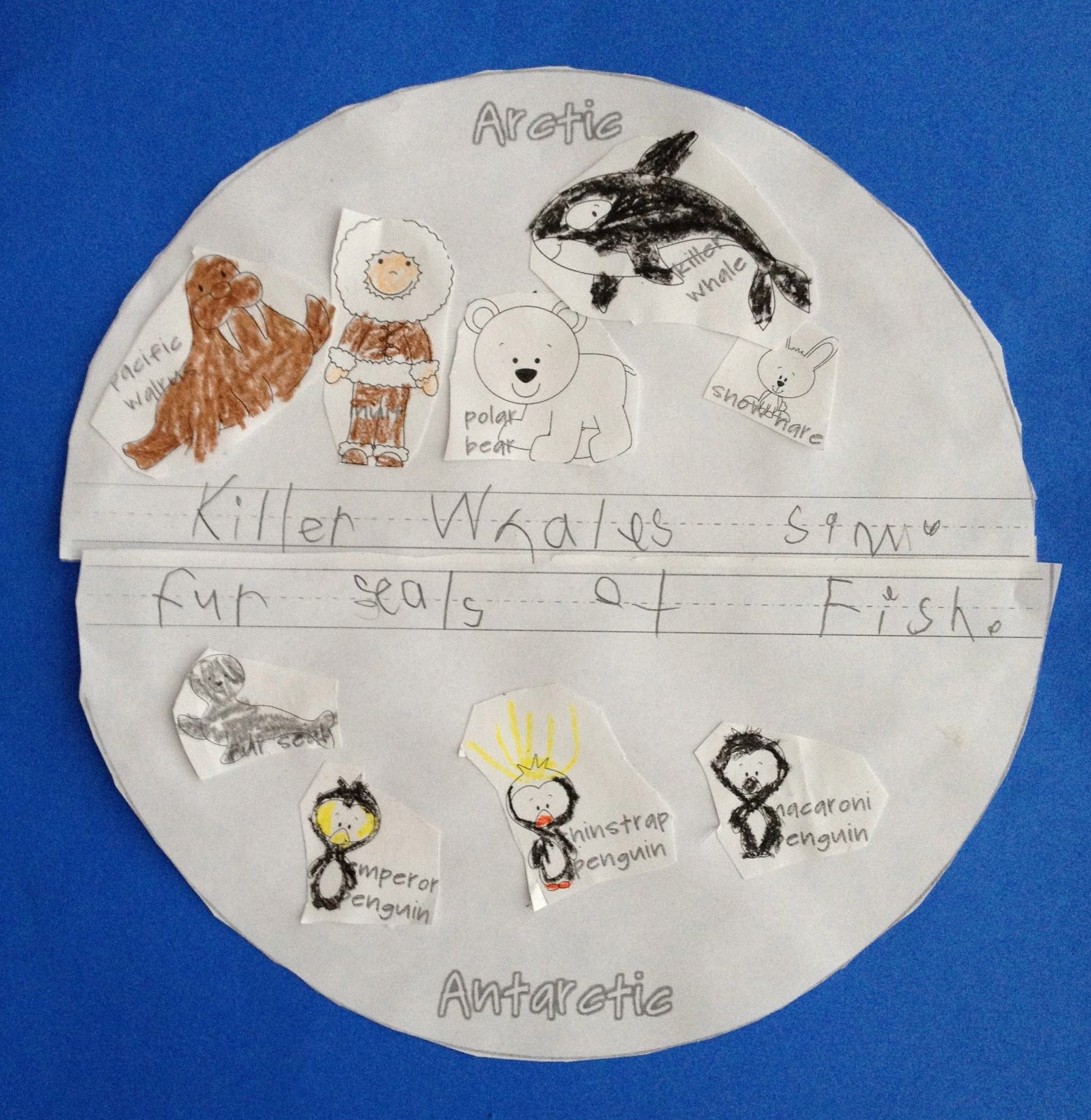Arctic Animals Vs Antarctic Animals Sort Animals Amp Write