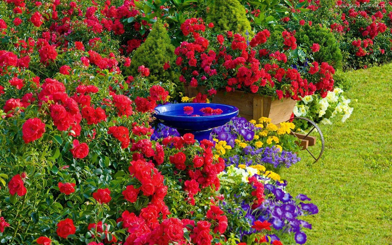 Ogrod Ogrodek Kwiaty Ozdoby Easy To Grow Bulbs Easy Garden Landscaping With Roses