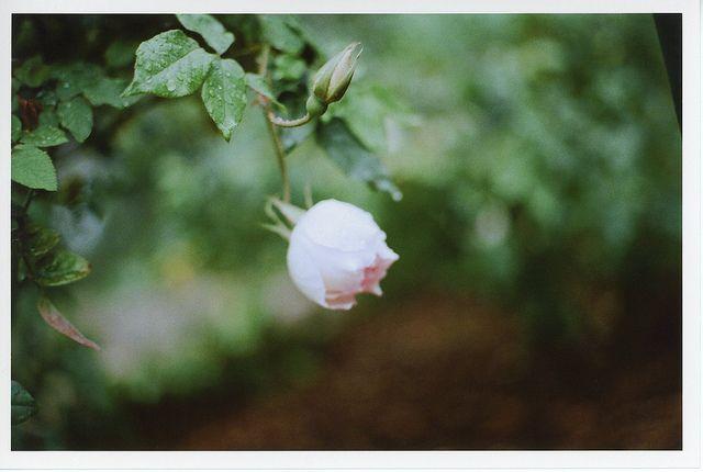 beauty in stillness  by Lilah Shepherd, via Flickr