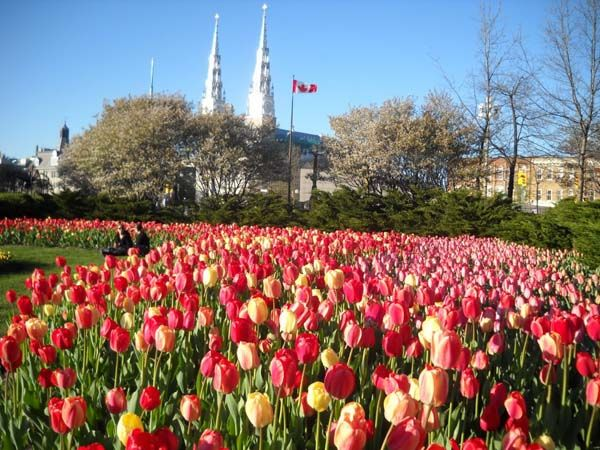 How To Get Rid Of A Bad Day In 2 Minutes Or Less Tulip Festival Tulips Canada