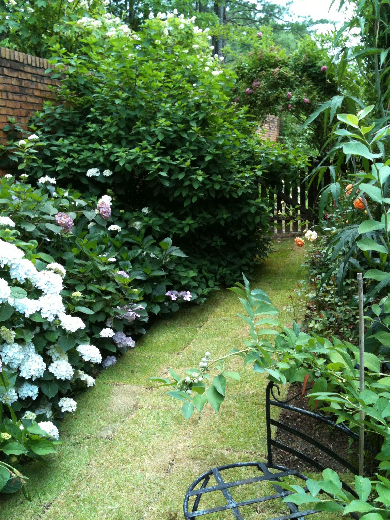 garden Garden, Plants