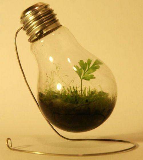 ¿Cómo colocar plantas en bombillas?